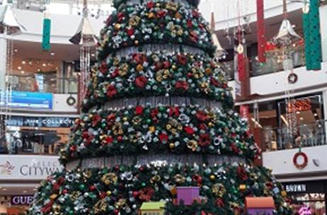 Christmas Tree In India